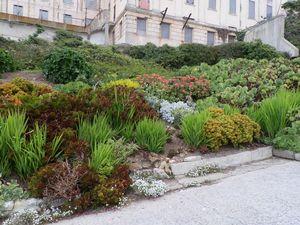 Alcatraz Prison Garden