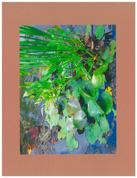 Lily Pad Life      By C J - C J's Gallery