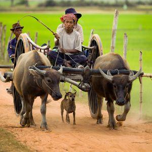 Natural Cambodia