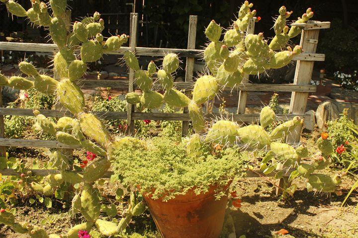 cactus - Sprouts_l2b