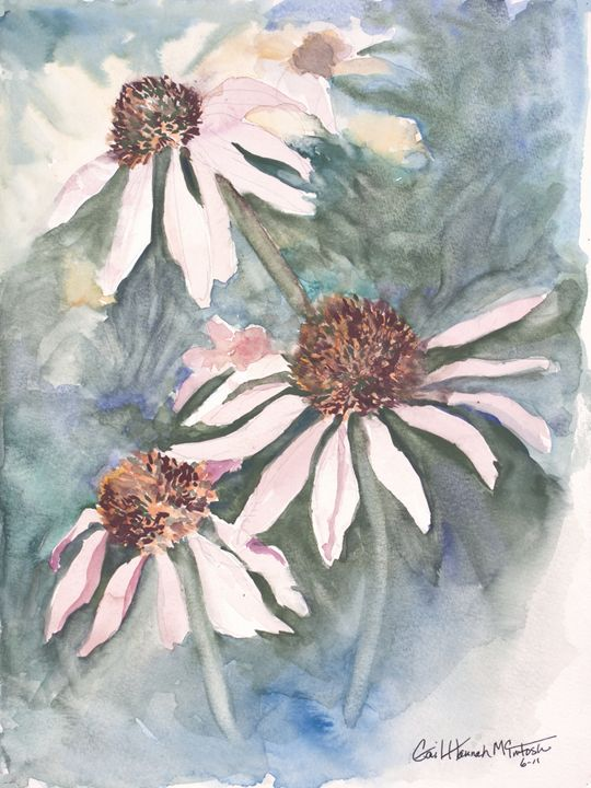 Echinacea - Gail H. McIntosh