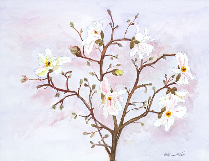 Tulip Magnolia - Gail H. McIntosh