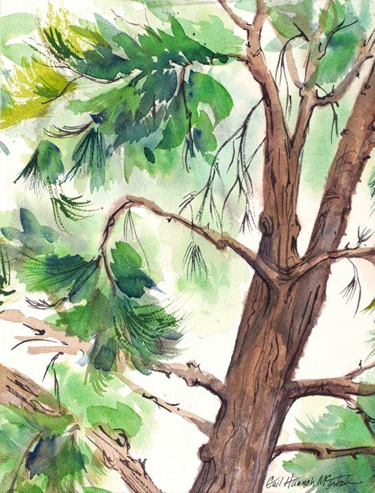 Pine Tree - Gail H. McIntosh