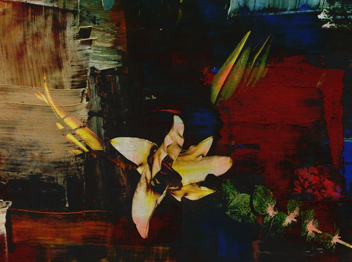 Abba Lily Abstracta - Abstractly Abraham