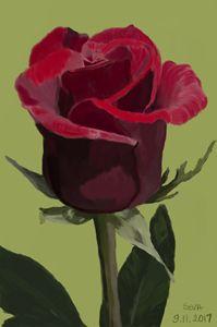 """Red Rose"" digital painting by Seva"