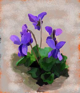 """Violets"" by Seva"