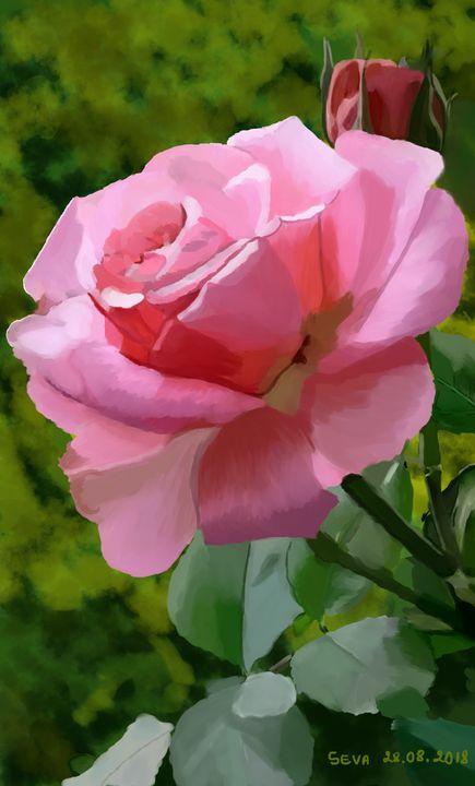 """"""" Pink Rose"""" by Seva - Seva"""