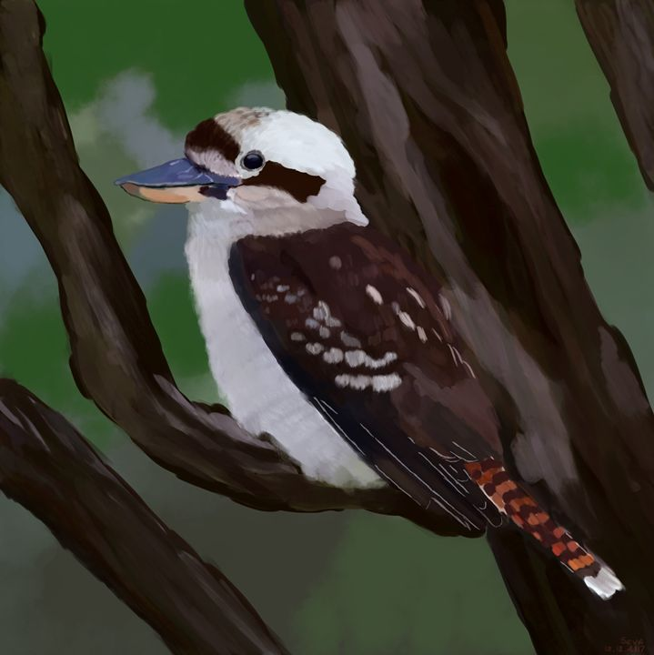 """"""" Laughing Kookaburra"""" by Seva - Seva"""