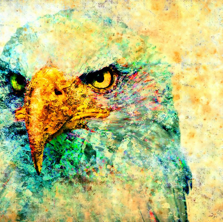 American Eagle - Stacey Art Prints