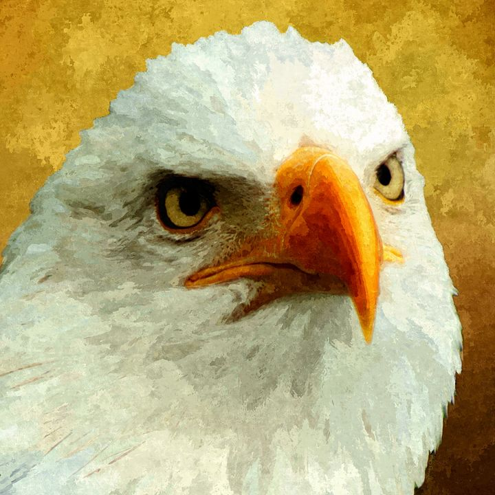 Portrait Of An Eagle - Stacey Art Prints