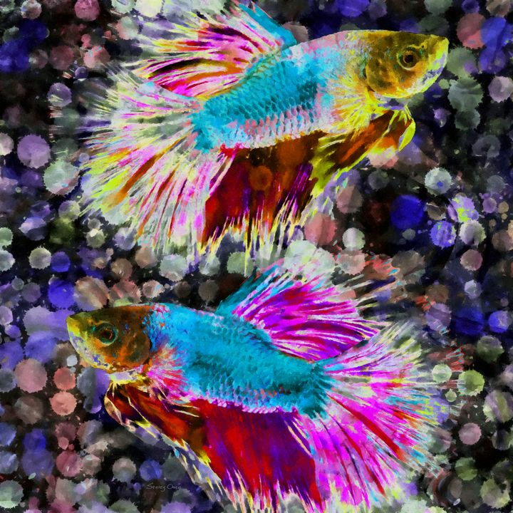 Siamese Fighting Fish - Stacey Art Prints