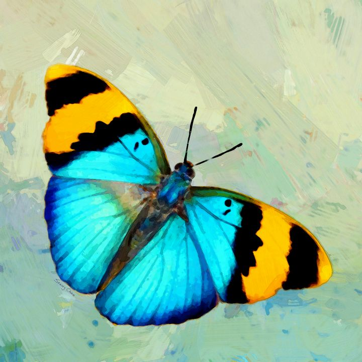 Butterfly Art - Stacey Art Prints