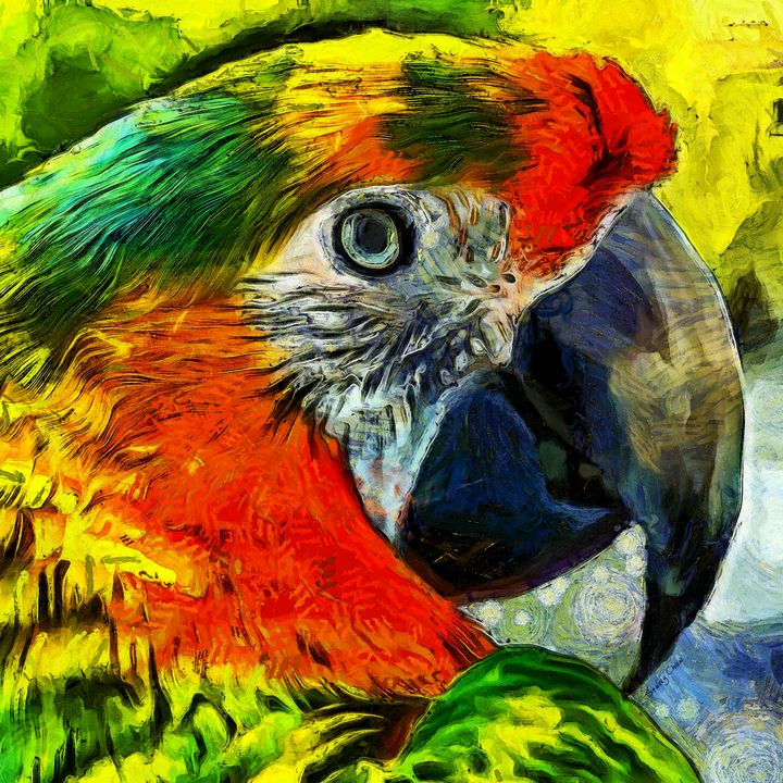 Parrot - Stacey Art Prints
