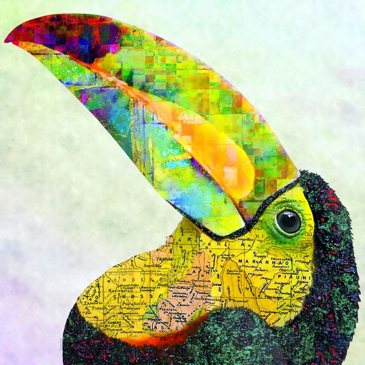Toucan - Stacey Art Prints