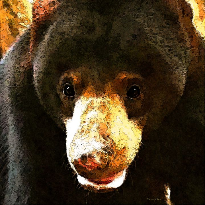 Sun Bear - Stacey Art Prints