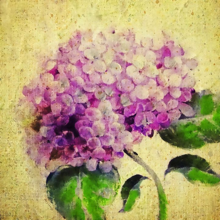 Blooming With Happiness - Hydrangea - Stacey Art Prints