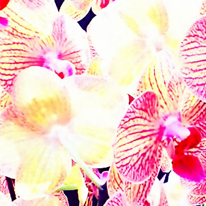 Tropical Orchid - Stacey Art Prints