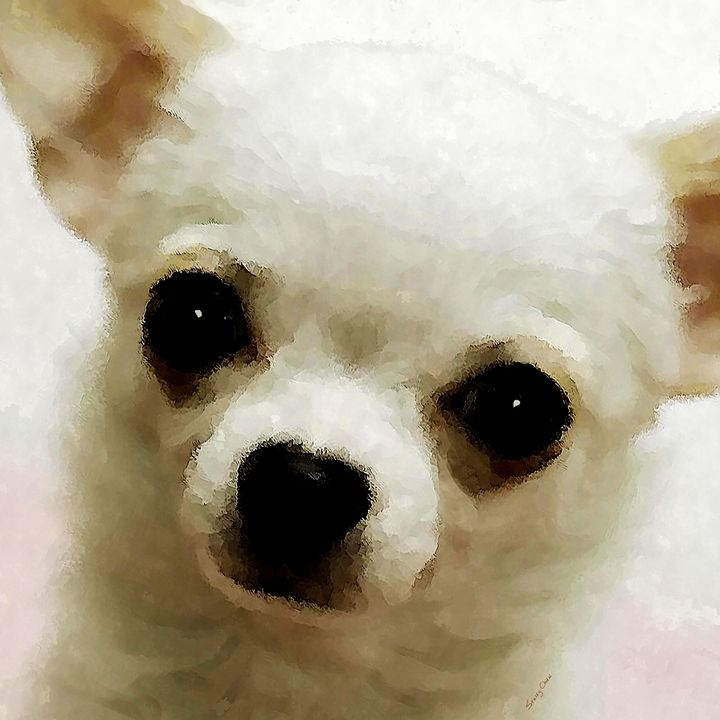 Chihuahua - Stacey Art Prints