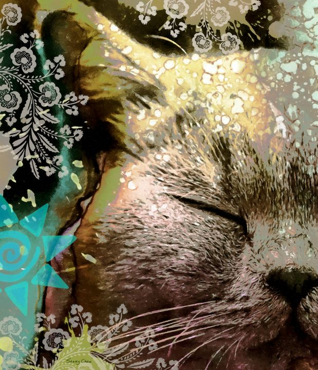 A Cat Daydreaming - Stacey Art Prints
