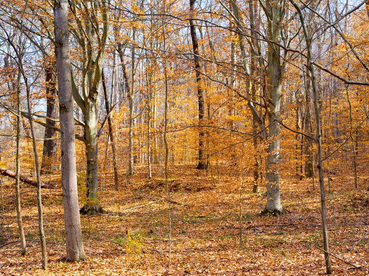 Late Fall Color Diminishing - Matthew katt