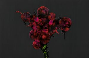 Dark Beauty II