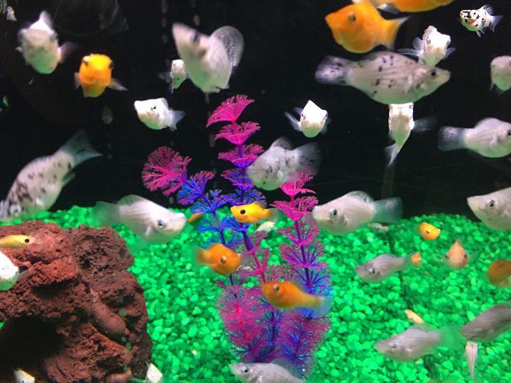 Aquarium - GLH Inspirations
