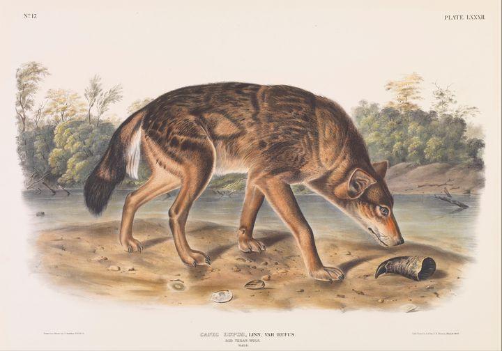 John James Audubon~Canis lupus, Linn - Artmaster
