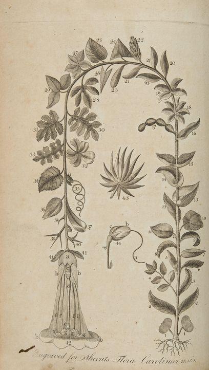 John Linnaeus Shecut and Edward Whit - Artmaster