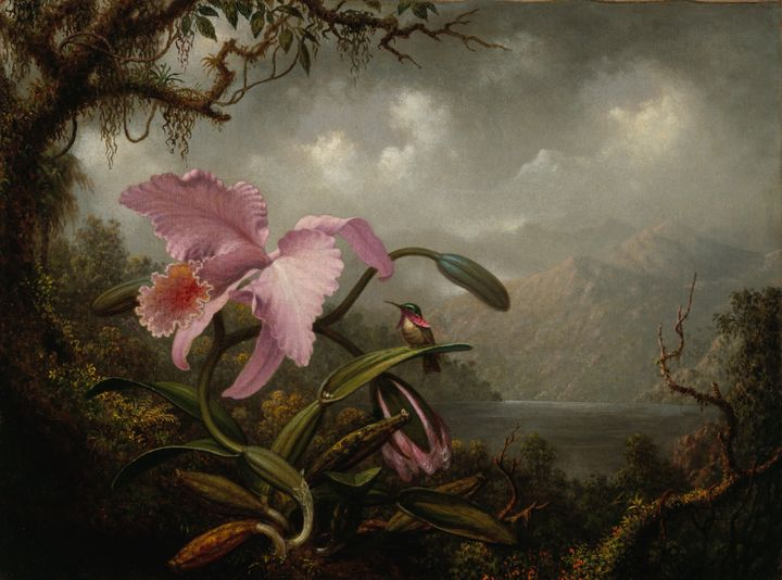 Martin Johnson Heade~Orchid and Humm - Artmaster