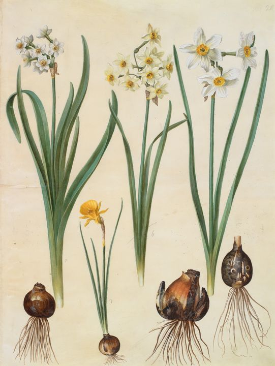 Johannes Simon Holtzbecher~Narcissus - Artmaster