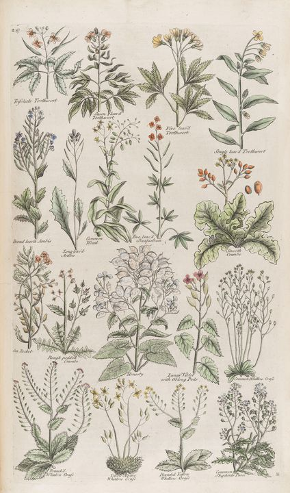 John Hill~The British Herbal, Plate - Artmaster