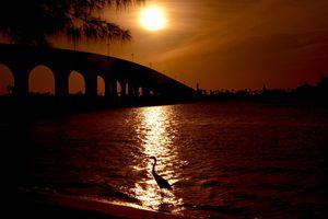 Great Blue Heron Sunset Light Beach