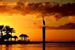 A bird at the sunset, at sea