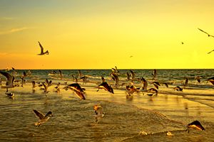 Beautiful sunset birds taking off