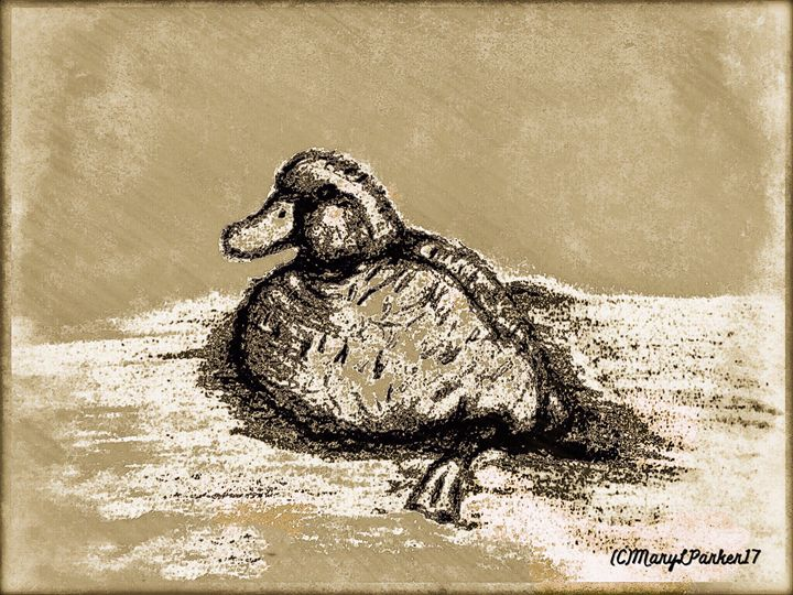 Sketch Of Duck In Water - MaryLeeParkerArt