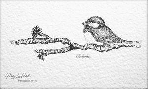 Chickedee On The   Branch - MaryLeeParkerArt