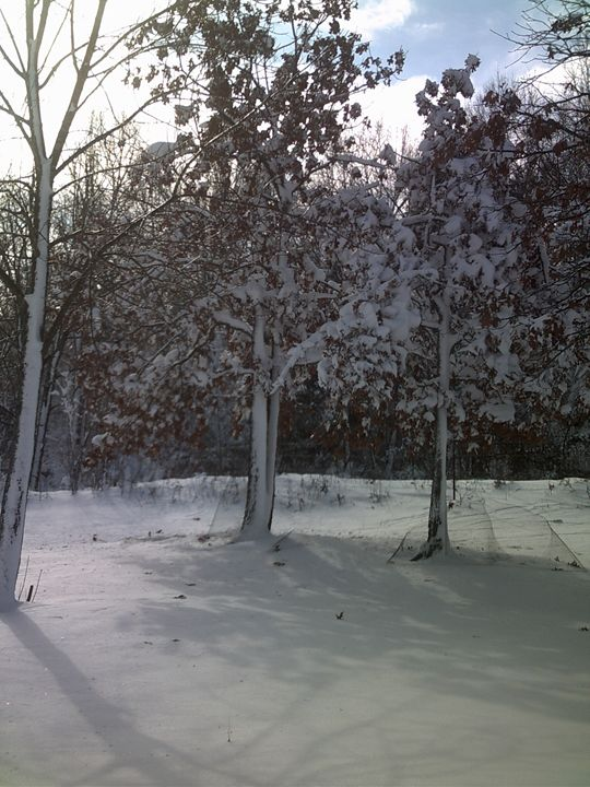 arkansas winter - american beauty