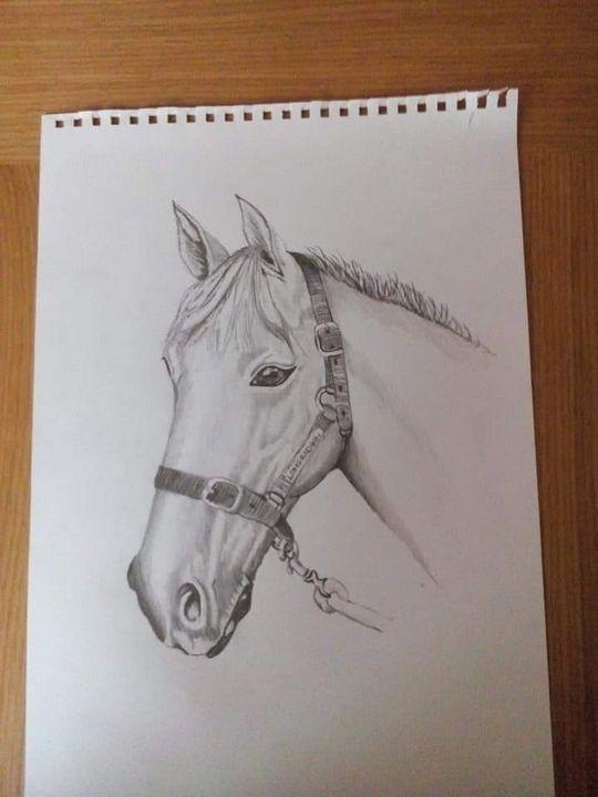 Grey horse sketching - Michael Morgan