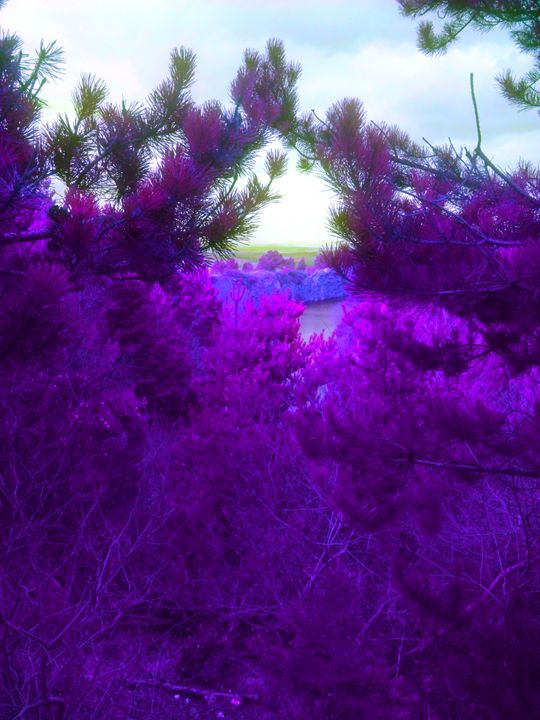 purple dayz - corish art