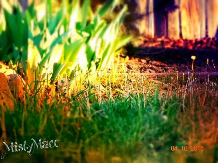 Back yard days - Misty Place