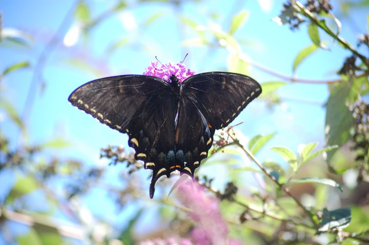 Butterfly beauty - Christine's gallery