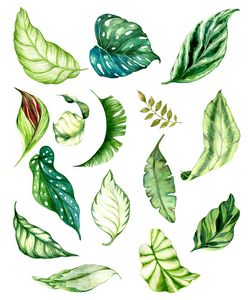 Watercolor set of tropical leaves