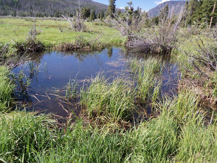 pond - Amber