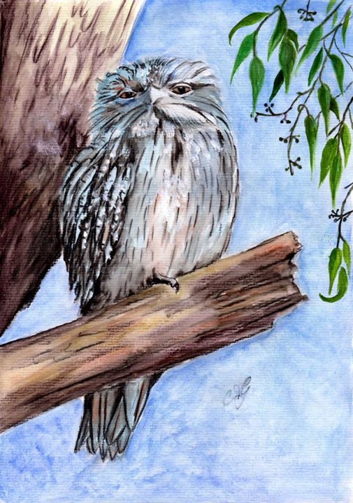 Tawny frogmouth - Annies art