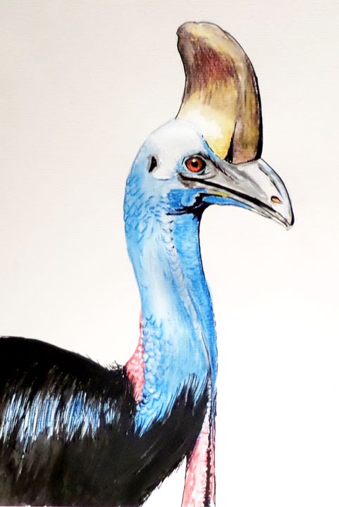 Cassowary - Annies art