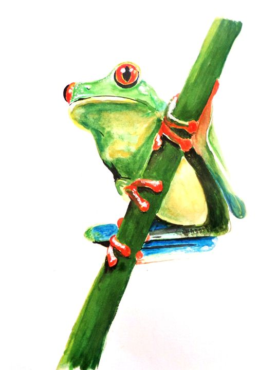 Red-eyed tree frog - Annies art