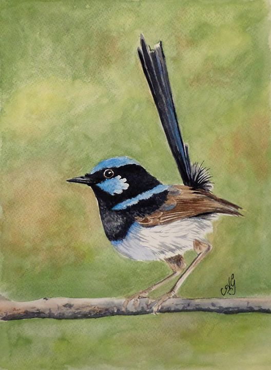 Superb fairy wren - Annies art