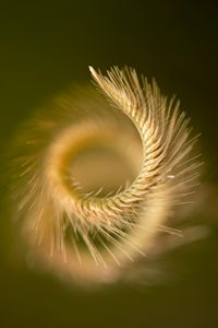 Spiral seeded