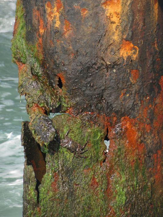 Rust, slime and a crab - suekeastphotos
