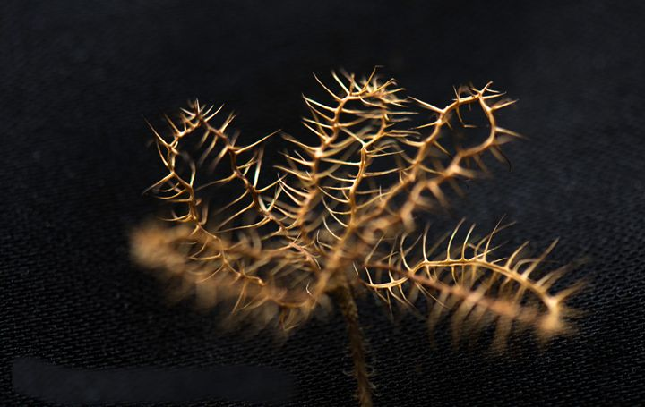 Golden and spikey - suekeastphotos